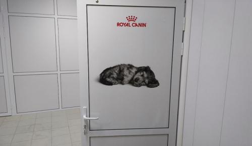 Интерьерная печать для ветеринарного центра